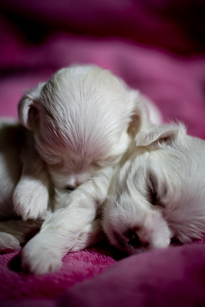 Puppies_18
