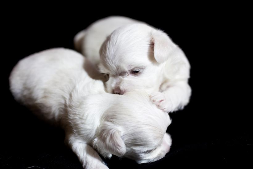 Puppies_23