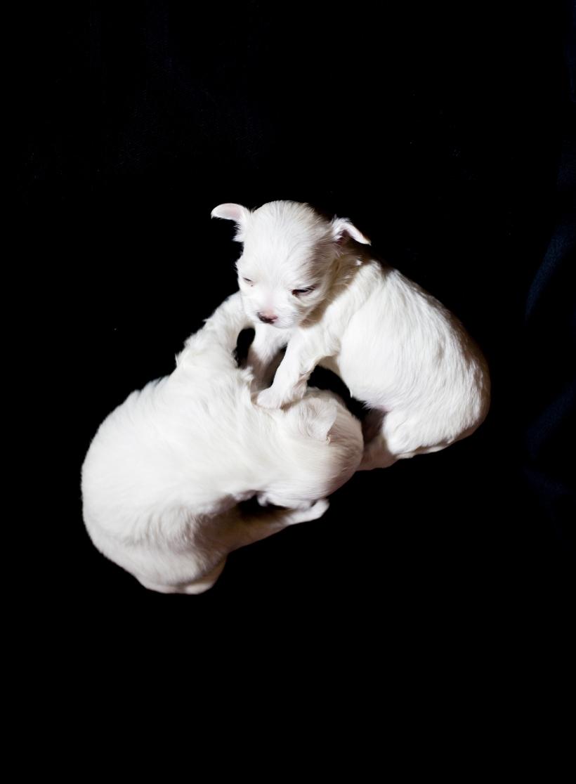Puppies_24