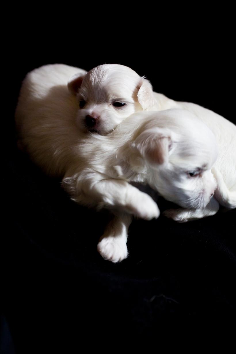 Puppies_25