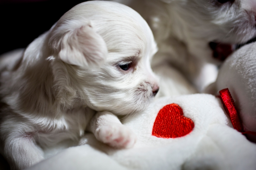 Puppies_29