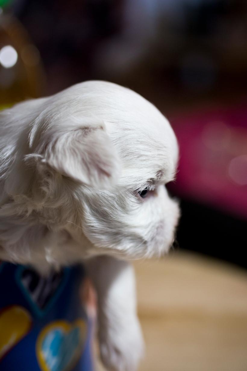 Puppies_8